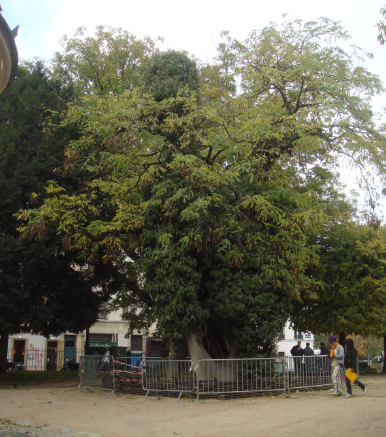 vieille_arbre_paris_1